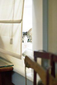 0074-一条工務店の家はカーテンが不要?