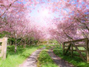 春-季節の変わり目-寒暖-暖差