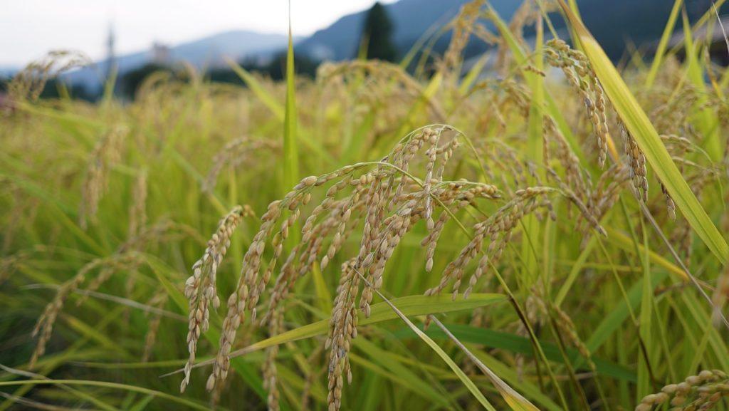 一条工務店の自動軽量機能付き米びつとお米の話