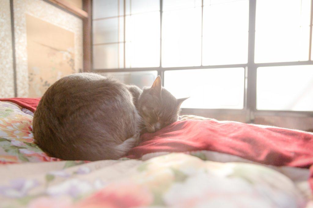 快適な家で眠る猫